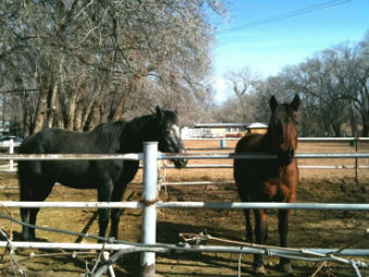 Horses in the North Valley