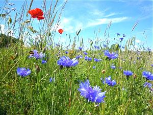 Wildflowers in Bakersfield