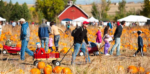 Pumpkin Festival at Denver Botanic Garden at Chatfield