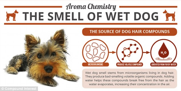 Infographic- Dog smell