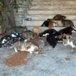 20150529-straycats