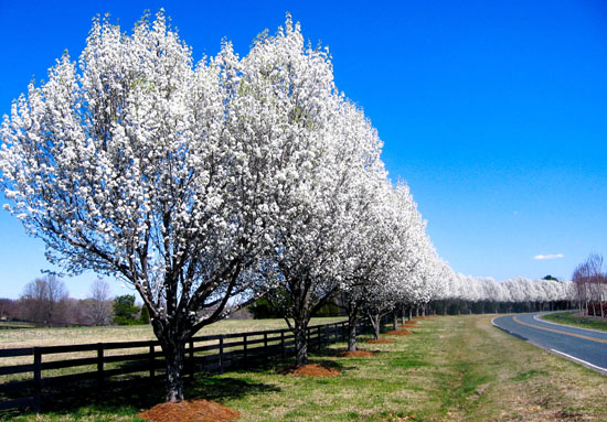 Waxhaw North Carolina