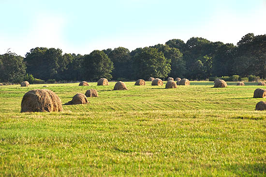 Farmland in Weddington, NC