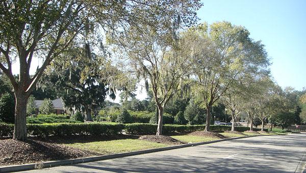 Park West Mount Pleasant