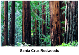 Santa Cruz County Redwoods