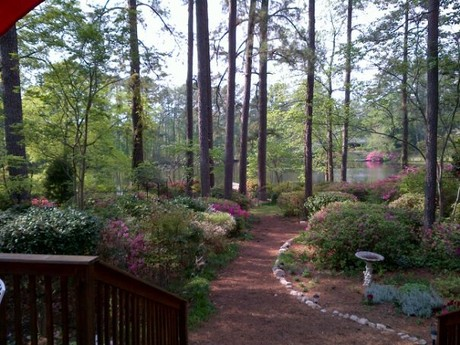 Forest Acres Back Yard Columbia SC