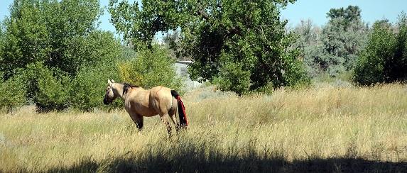 Ramona Real Estate - Horse Properties in San Diego