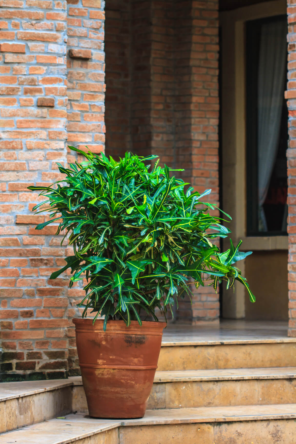 Budget friendly curb appeal ideas for Potted plants by front door