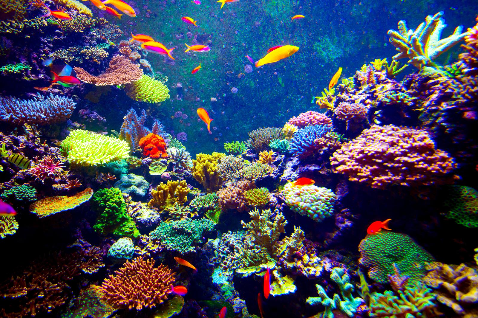 Visit sea creatures near florida homes at the florida aquarium for Florida tropical fish