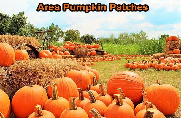 Fredericksburg VA Pumpkin Patches Post Image