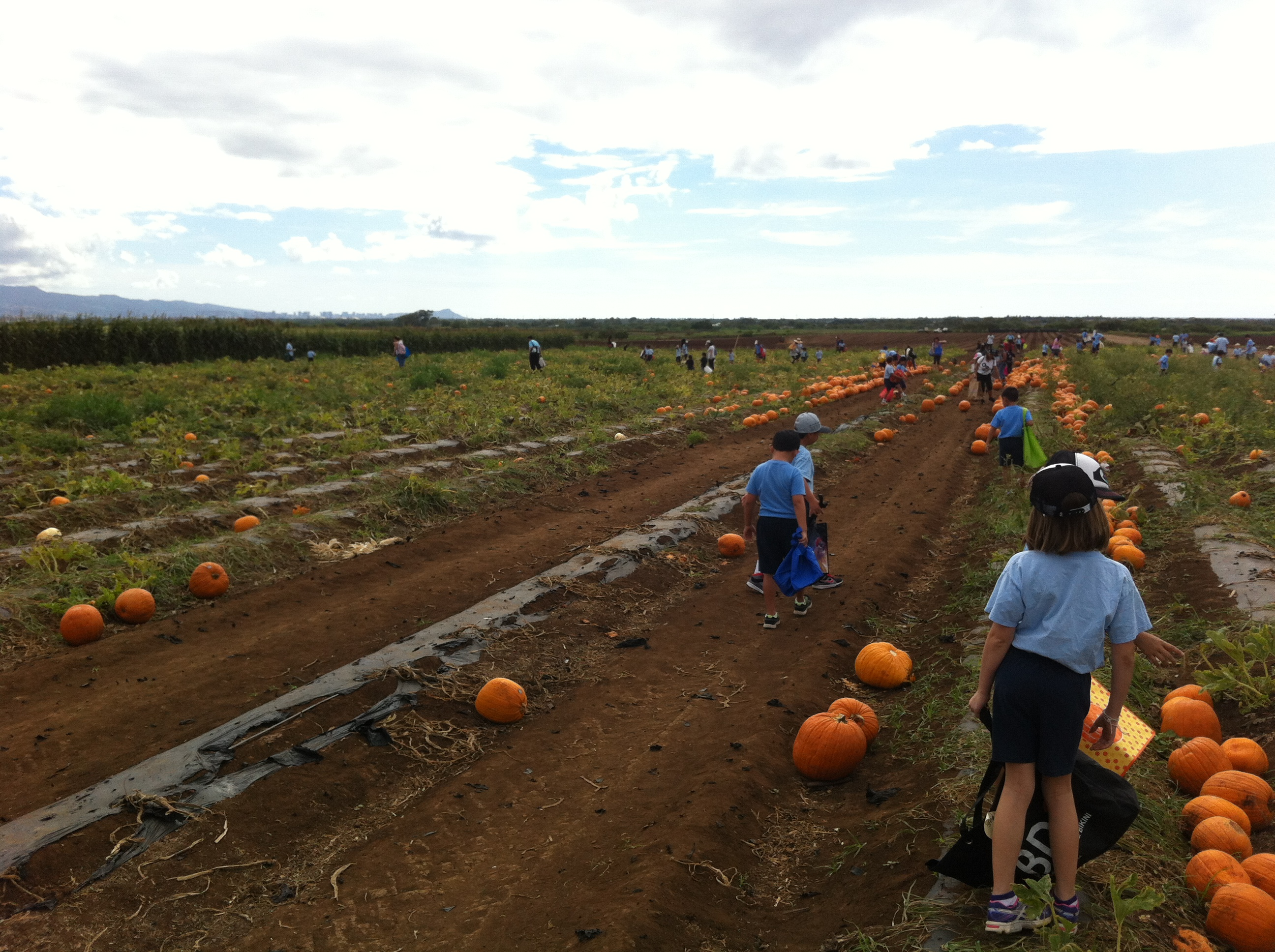 Aloun Farms Pumpkin Patch in Kapolei