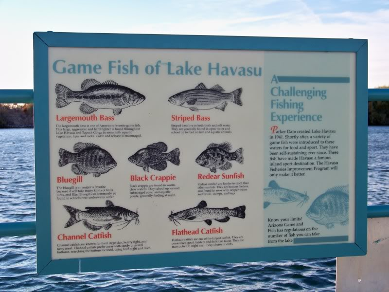 Lake havasu fishing for Arizona game and fish locations