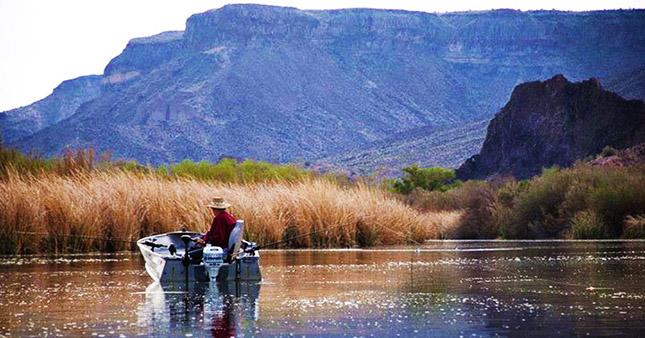 Things to do in havasu for Lake havasu fishing