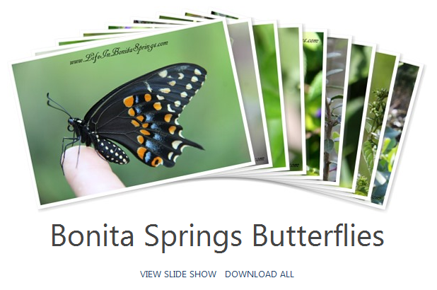 Bonita Springs Butterflies