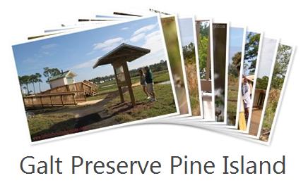 Galt Preserve Pine Island
