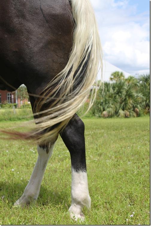 Horses Arse