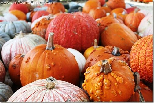 Fall Events Riverside Park