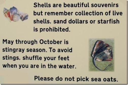 Live Shelll Fish