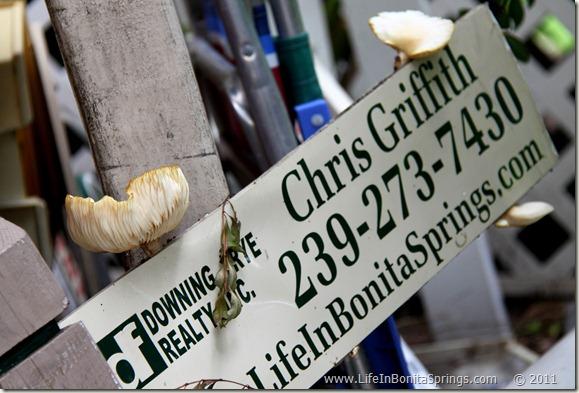 Chris Griffith Mushroom Sign