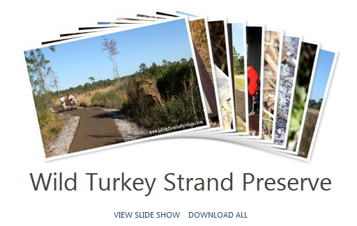 Wild Turkey Strand Preserve Photos