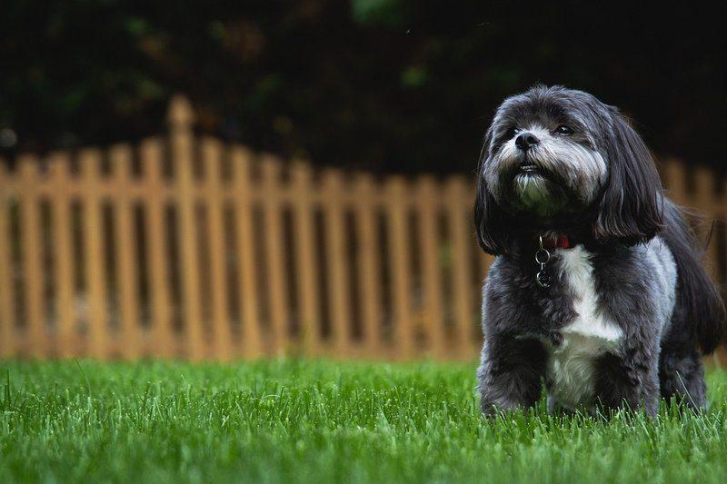 cute dog in a backyard