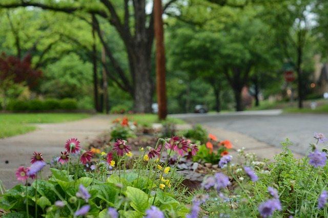 flowers in a street median