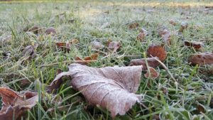 fallen leaves on a lawn in the winter