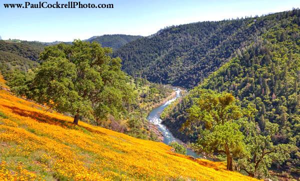 Poppies in the Canyon, Eldorado Hills