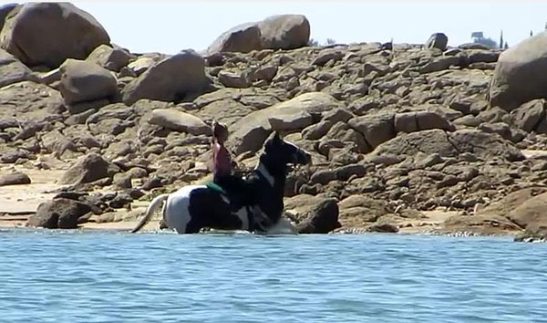 Horseback in the American River, Folsom CA