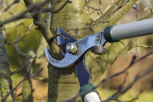 Fall is the time for pruning your trees and shrubs
