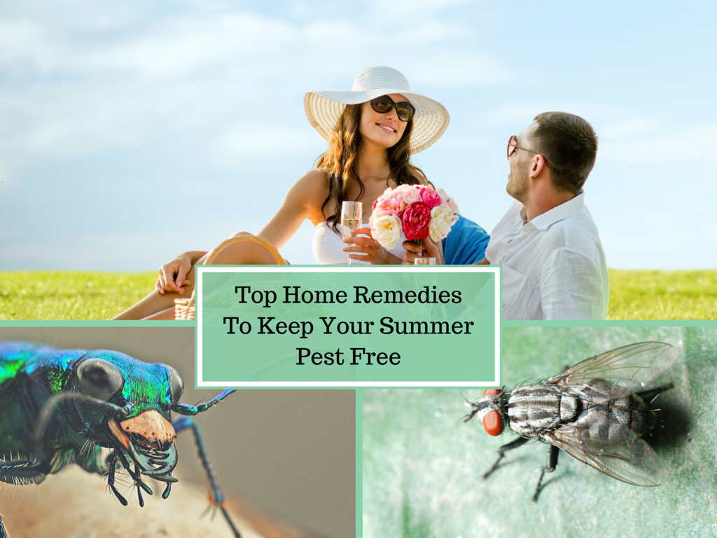 Top Home Remedies To Keep Your Summer Pest Free