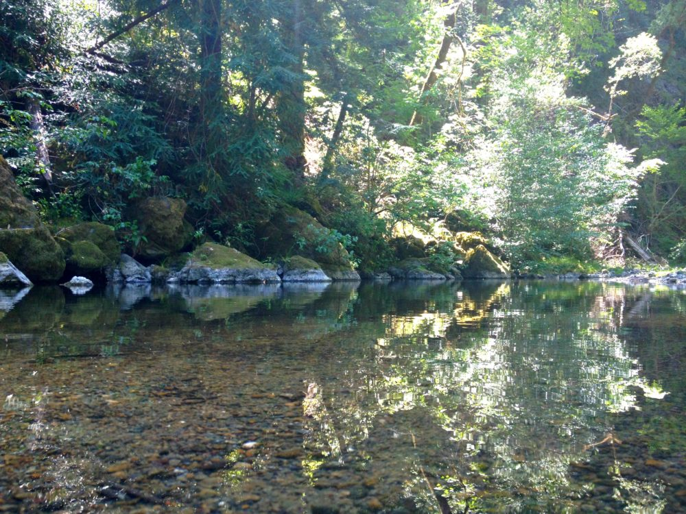Austin Creek Reflections