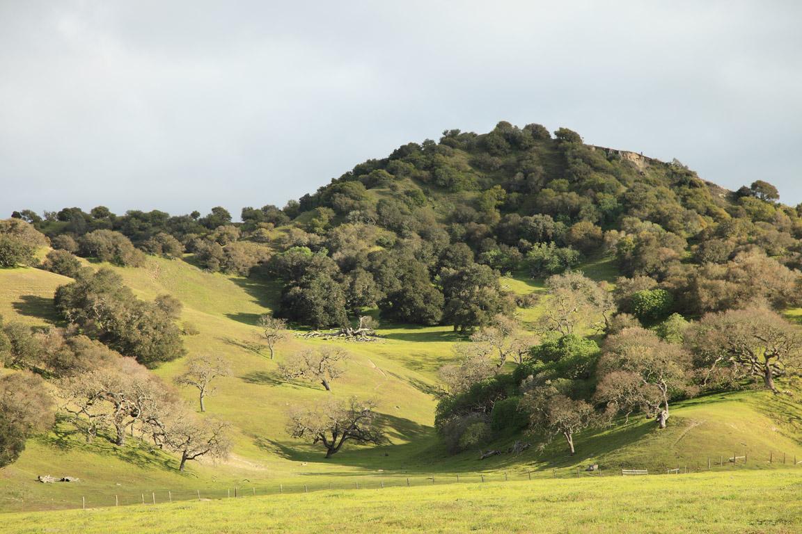 San Benancio Pastures of Heaven