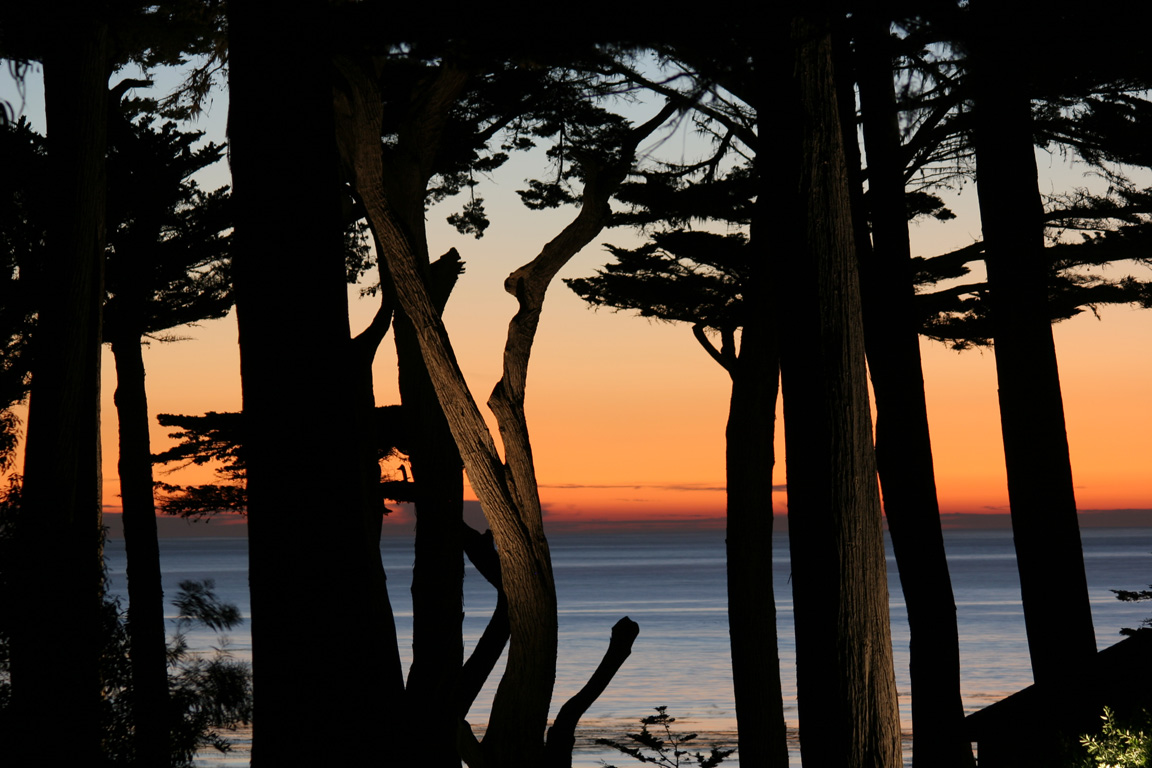 Pebble Beach Sunset thru the Cypress Trees