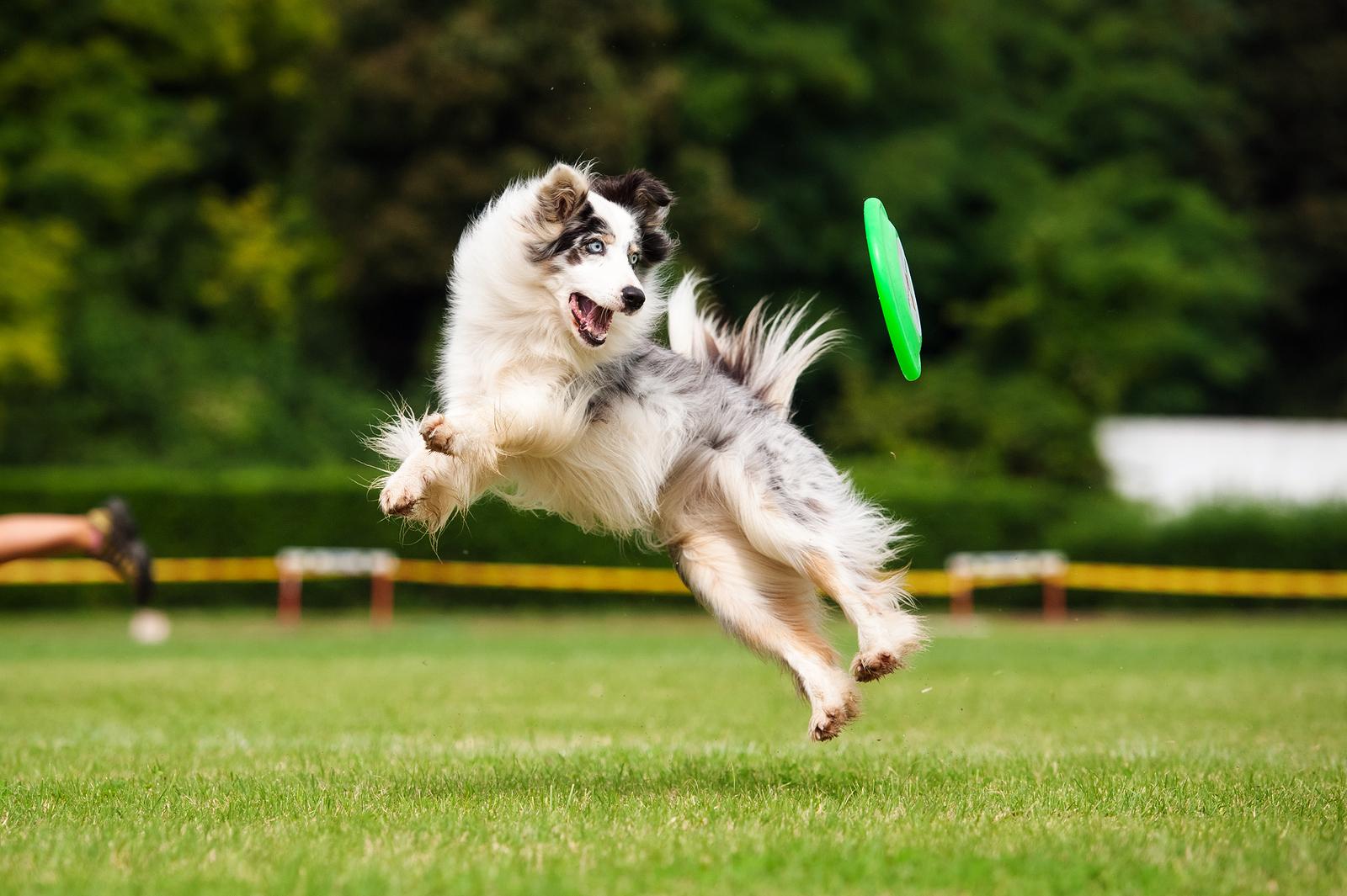 Visit Dog Parks When Living in Mercer Island