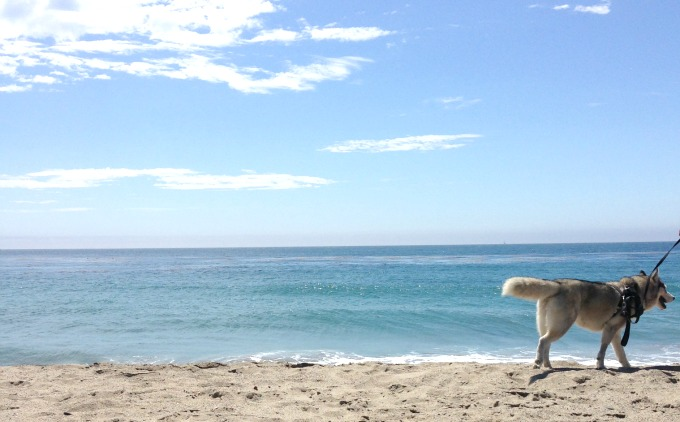 malibu_beach_dog_beach_leo_carrillo