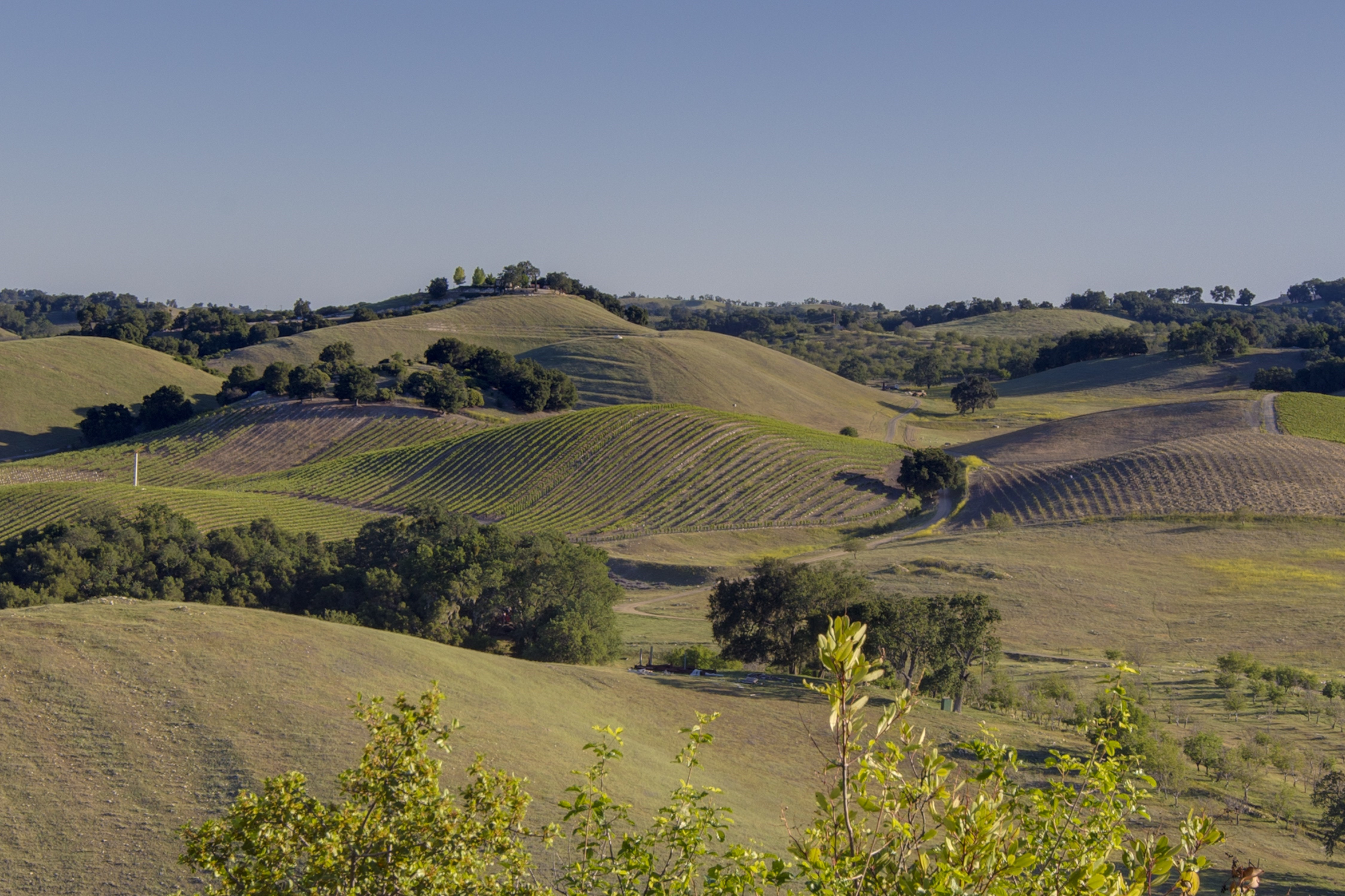 Paso Robles Real Estate
