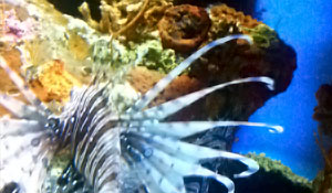The Nc Aquarium At Fort Fisher