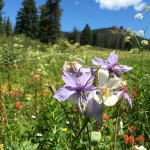 columbine and rabbit in distance