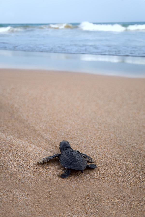 See the Myrtle Beach home of loggerhead turtles.