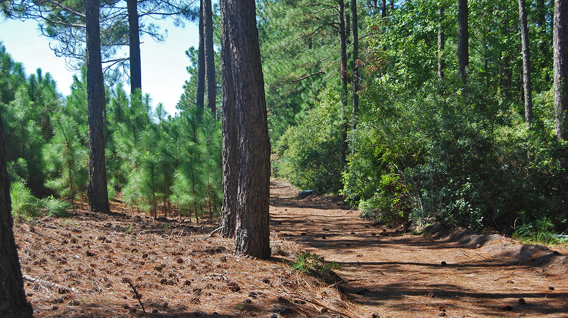 Tuscany Walking Trails
