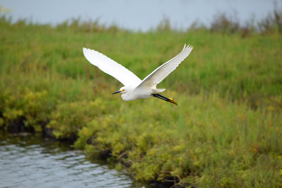 See water birds on Las Vegas property.