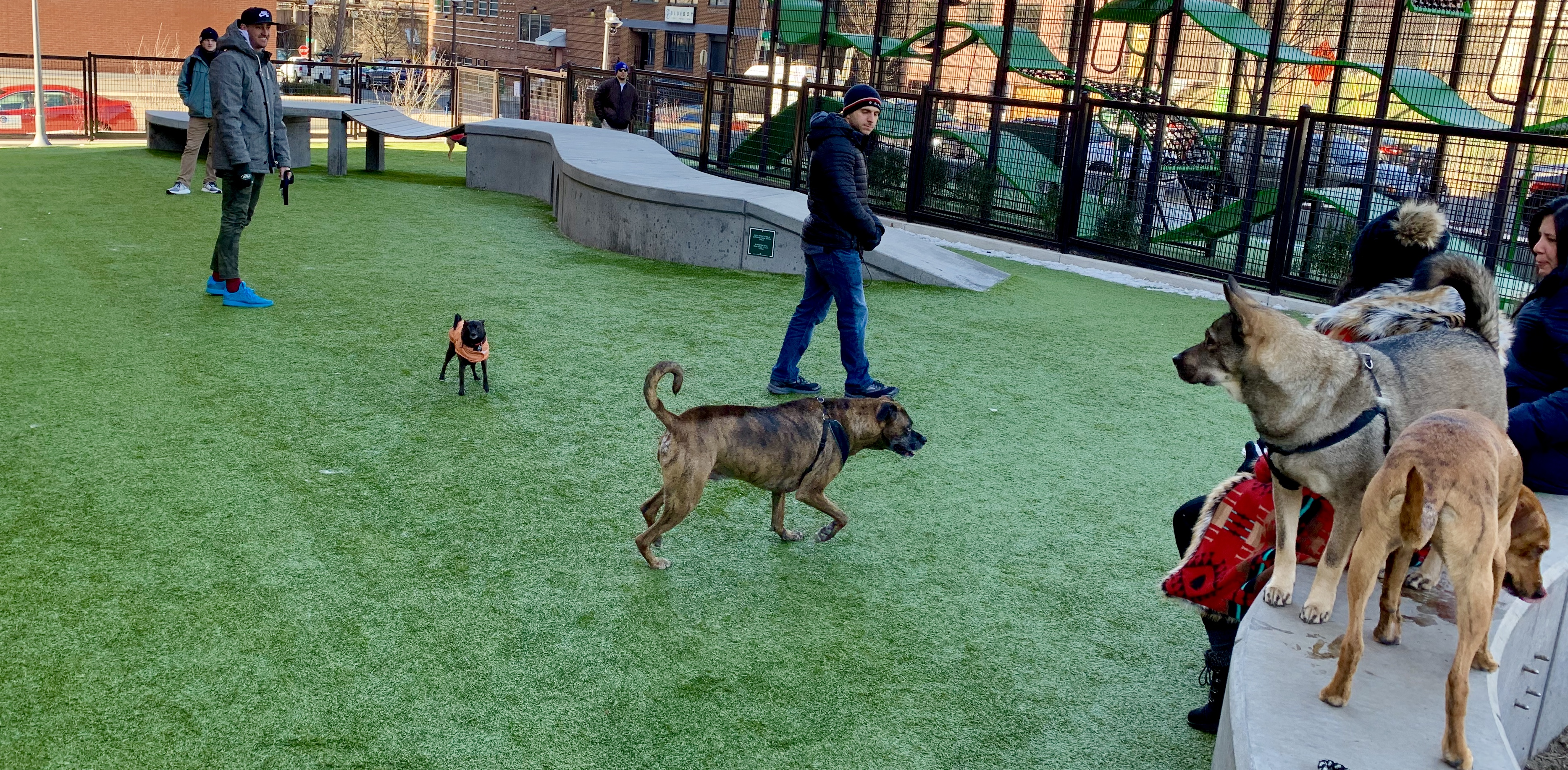Pet Friendly Condos in Washington, DC, Swampoodle Dog Park
