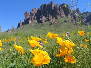 spring Flowers in the Superstition