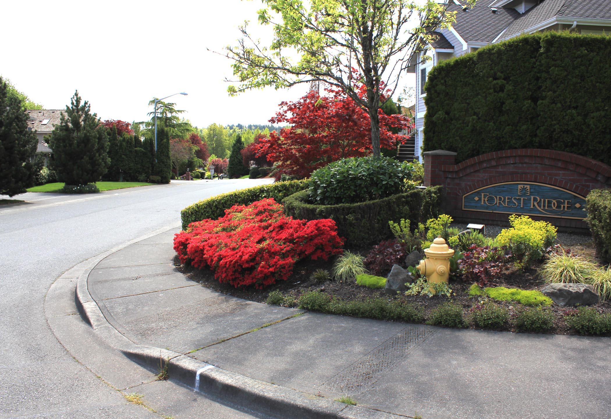 Forest Ridge Homes For Sale Bellevue Wa
