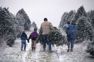 How to Cut Your Own Christmas tree In Central Oregon
