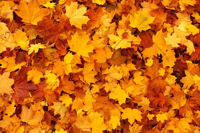 Falls Leaves in Bend