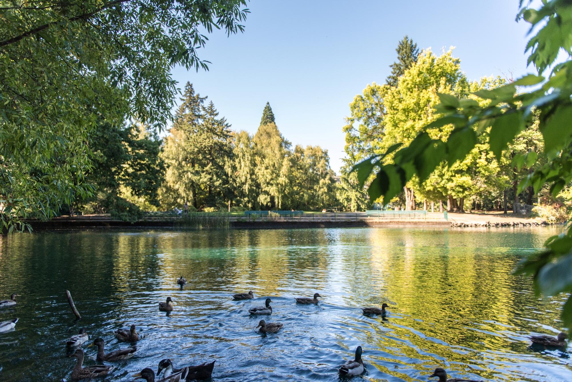 Laurelhurst pond