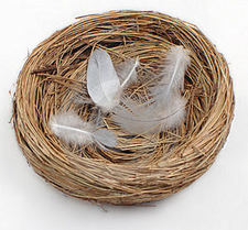 Empty_Nest_4_--_Website.jpg