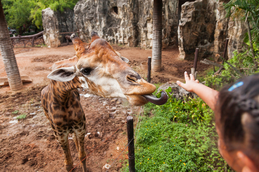Feed a giraffe on Houston real estate.